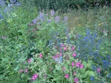 Gratis zakjes bloemzaad voor inwoners Zundert