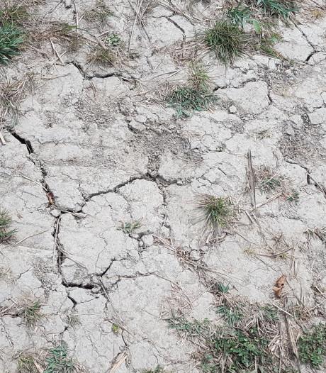 Boeren moeten ingrijpende keuzes maken na de droogte: 'Ze willen nu duidelijkheid'