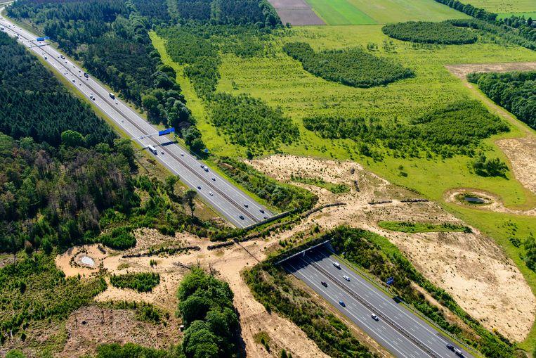 Ecoduct Jac. P. Thijsse overbrugt de A12 en verbindt de natuurgebieden Planken Wambuis en Reijerscamp.  Beeld Hollandse Hoogte
