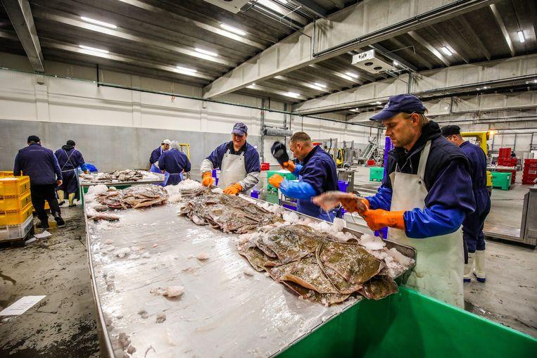 55 mensen werken in de vislosserspoule van Oostende.