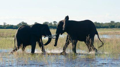 Op de machtige Zambezi