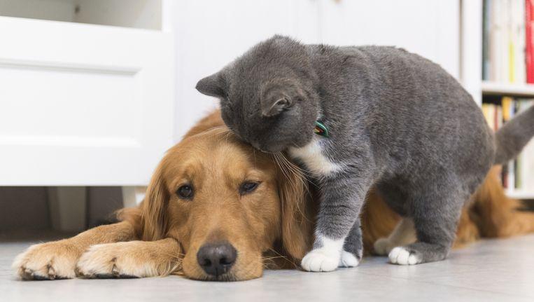 Wellicht is dieren temmen makkelijker dan tot nu toe gedacht. Beeld thinkstock