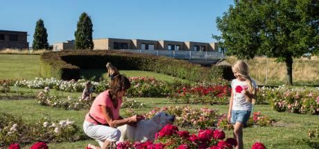 Boze bewoners Rokkeveen: ons is niks gevraagd over onderhoud rosarium
