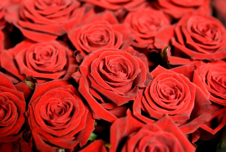 Rozen zijn populair met valentijn of op Moederdag, maar brengen ook een grote CO2-uitstoot met zich mee.