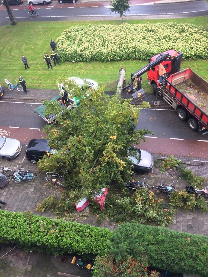 Een boom op de Bergselaan viel om.