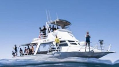 Deze toeristen zou het angstzweet uitbreken mochten ze zien wat er zich onder hun boot afspeelt