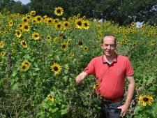 Van Erp lokt vogels met bloemen naar zijn boerenakker in Sint Anthonis