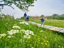 Groei en bloei in Uden, dankzij Peelrandbreuk