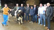 Laatste Vlaamse veemarkt blaast 150 kaarsjes uit