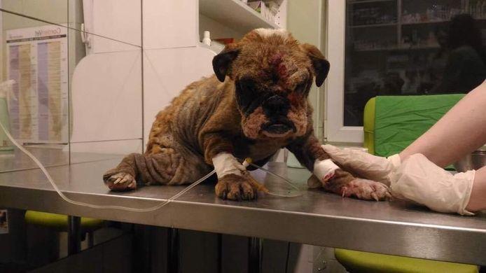 Verwaarloosde pups uit Hongarije die naar Nederland worden geexporteerd voor de verkoop.