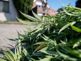"""Trio riskeert cel voor cannabisplantage met 38 plantjes: """"Idee was op café ontstaan"""""""