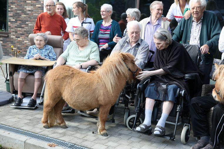 Jeanne Van der Elst aait voor het eerst in jaren nog eens een pony.