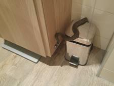 Vrouw vlucht toilet uit voor plots opduikende slang