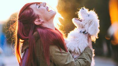5 hondenmemes die ons liefdesleven omschrijven