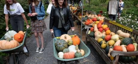 Pompoenmarkt Neerijnen: kruiwagens voor anderhalve meter afstand én om vol te laden