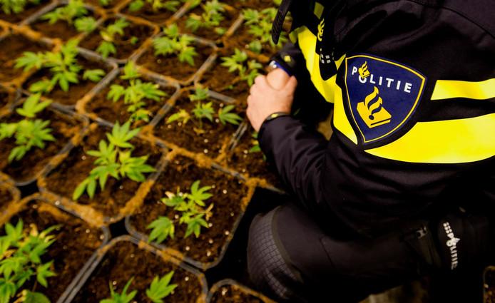 Het proefproject hensplantages krijgt een vervolg in Breda. Met hulp van slimme metingen kunnen hennepplantages worden gelokaliseerd.