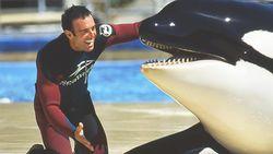 """""""SeaWorld is een horrorhuis"""", getuigt deze ex-orkatrainer"""