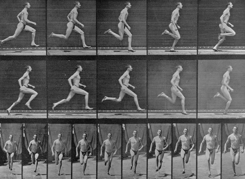 Edward Muybridge's bewegingsstudie uit 1887. Beeld Bettmann Archive