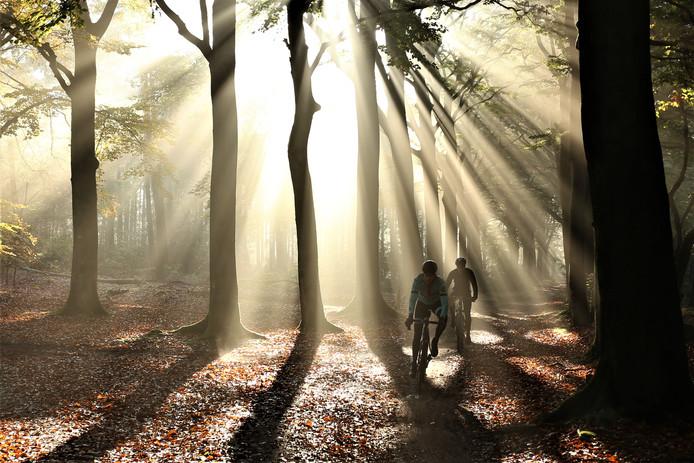 Fietscrossers snellen door het bos.