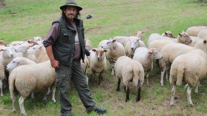 Geen geld meer voor 'Herder van het Pajottenland': project wordt stopgezet