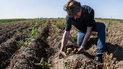 """Algemeen Boerensyndicaat trekt aan de alarmbel: """"Extreme hitte voorbij, maar problemen niet. Snel maatregelen nodig"""""""