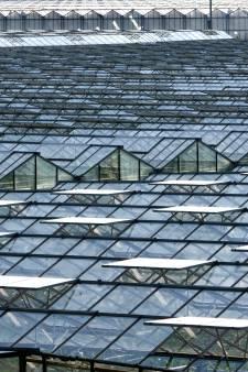 GBW luidt noodklok over herstructurering tuinbouw