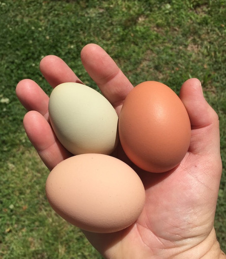 Diefstal eieren in Welsum komt vrouw op fikse boete te staan