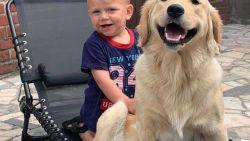"""Eigenaars van verdwenen hond beloven grote beloning voor goede tip: """"Zes weken zonder nuttig spoor"""""""