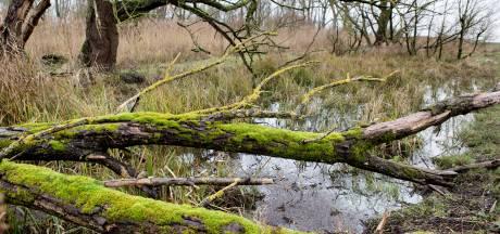 Hoeksche Waard werkt aan 'groene slinger' door de bebouwde kom om dieren handje te helpen
