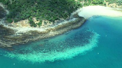 """Wetenschappers willen met """"helderdere wolken"""" Great Barrier Reef beschermen"""