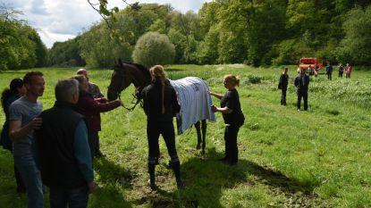 Paard schrikt van fietser en belandt in vijver: ruiter afgevoerd