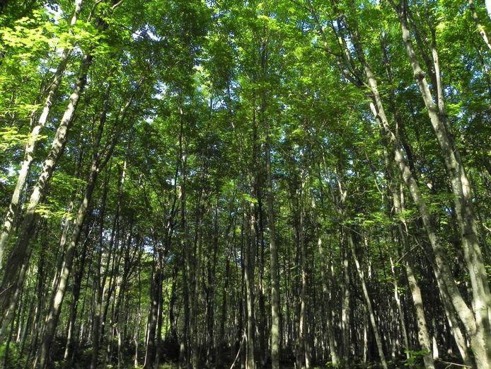Het Landschapsfonds Groene Woud keert jaarlijks geld uit aan projecten die een bijdrage leveren aan de verdere duurzame ontwikkeling van Het Groene Woud.
