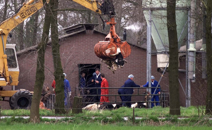 April 2001: dode dieren worden geruimd in Kootwijkerbroek. Inwoners menen dat het dorp ten onrechte MKZ-besmet is verklaard.