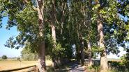Groen Diksmuide start gerechtelijke procedure tegen kap bomenrij aan De Blankaart