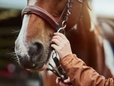 """L'administration wallonne doit """"punir sévèrement"""" les auteurs de violences sur les chevaux"""
