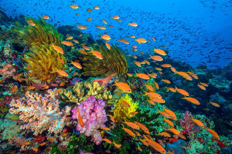 Uit Blue Planet II: een koraalrif in Fiji.