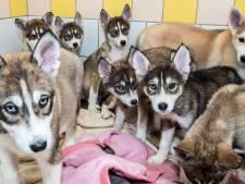Telefoon roodgloeiend voor gedumpte puppies