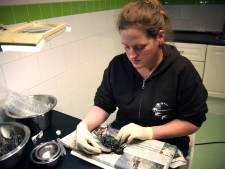 Laboratorium bevestigt: Spreeuwensterfte door natuurlijke vergiftiging via de taxusplant