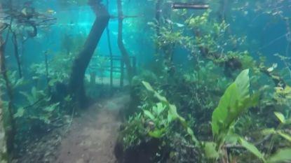 VIDEO: overstroming in Brazilië tovert natuurgebied om in onderwaterwoud