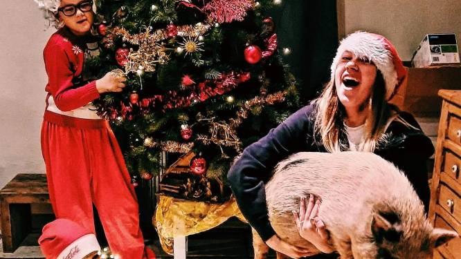 """Populair hangbuikzwijn Babette krijgt nieuwe thuis: """"We hebben al een Romeo, nu hebben we zijn Julia gevonden"""""""