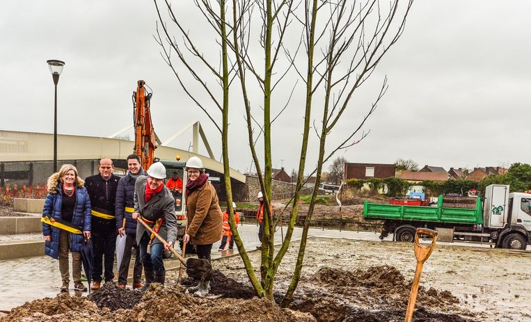 Burgemeester Youro Casier hielp in weer en wind mee met het planten van de zomereik op de site van de nieuwe Leiebrug.