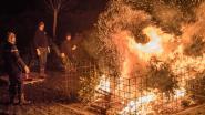 Grote opkomst voor allerlaatste kerstboomverbranding