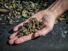 Natuurmonumenten is tegen de kweek van oesters op tafels in Oosterschelde