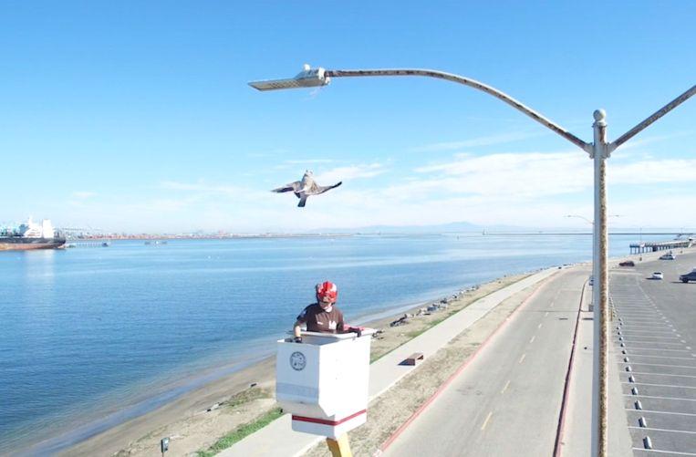 In Californië kwam een meeuw vast te zitten in een visdraad aan een lantaarnpaal.