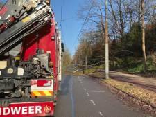 Boom valt op trolleyleiding in Arnhem, busverkeer gestremd