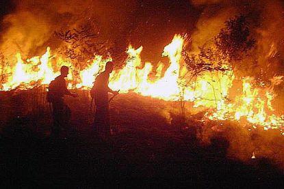 """Aantal branden in Amazonewoud met 20 procent gestegen: """"Meer toezicht ter plaatse nodig"""""""