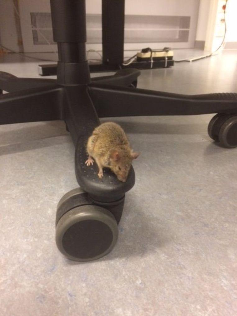 Muizen in het gerechtsgebouw.