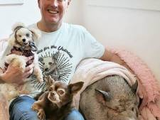 Il offre une fin de vie heureuse aux animaux dont plus personne ne veut