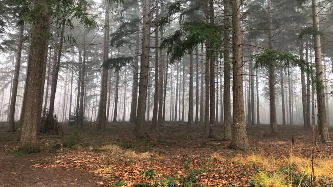 ANB wil opnieuw kappen in Vagevuurbos: vzw Bescherm Bomen en Natuur neemt de wapens op