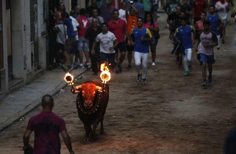 Een 'toro embolado', een stier met ontvlambaar materiaal aan zijn hoorns, in Meliana, vlakbij Valencia, begin augustus.